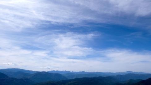 Drøm: Den store hvide fugl (12/8 2009)
